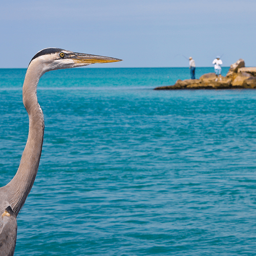 Photo of a bird by the ocean
